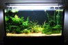 3 ft planted tank