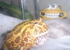 Jabba The Frog and his best friend behind....