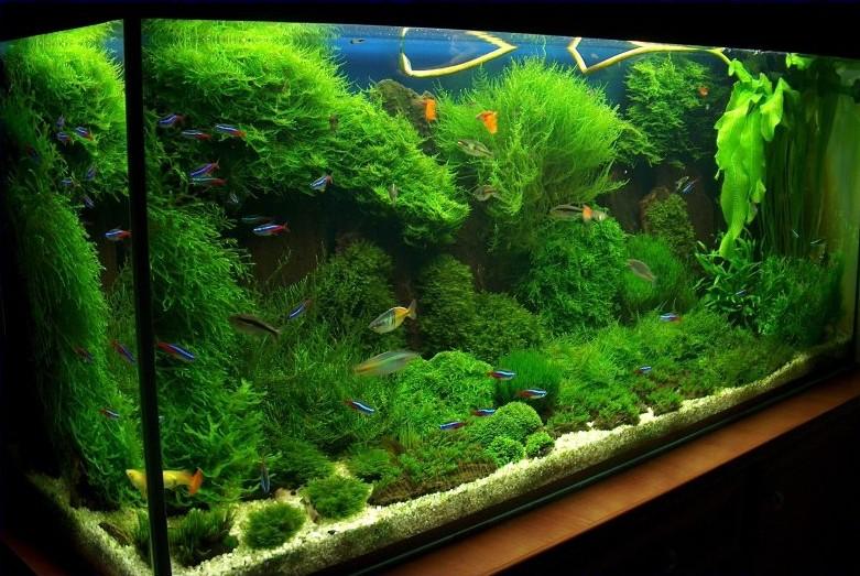 My moss tank