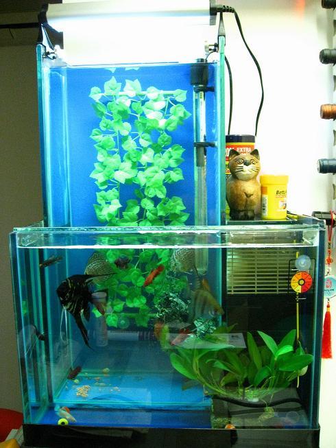 WaterFall Tank
