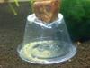 Seed Shrimp Trap