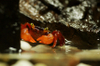 Geosesarma Krathing