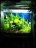 Photo Updates to my Nano Tank