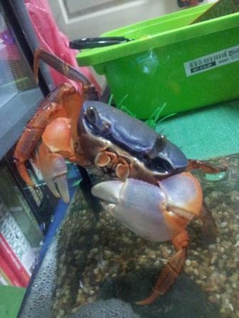My First Crab Tank (4 Feb 2012)
