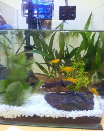 My First Fish Tank (14 Feb 2012)
