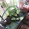 My Little Ecosystem