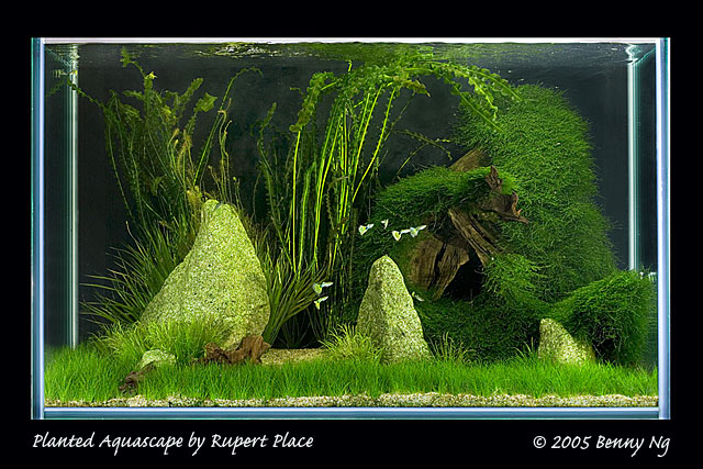 Planted Aquascape by Rupert Place