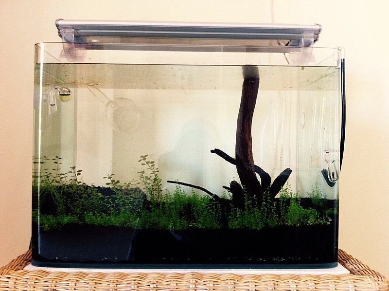 My first Planted tank - 2013