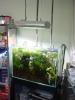 ADA Tank in Tokyo Fish Shop
