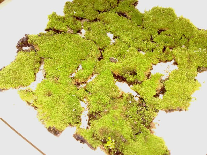 Moss Collect