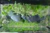 AQ Planted Tank Workshop Jun 05