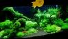 Aquarama 07 - planted second prize