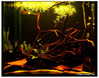 1.5ft Amazon biotope tank