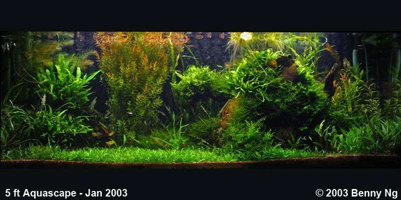 5 ft aquascape - Jan 2003