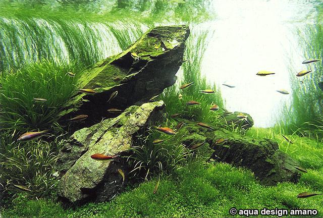 ADA planted aquascape