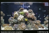 Aquarama Marine Tank Competition