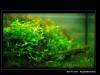 AquaObsession_ZoliTiZile_Ada2006