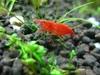 Sakura And Fish