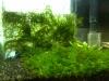 Nano Tank with Cherry Shrimps