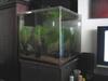 2ft Cube Tank