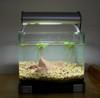 2 Liters Nano Tank 28 Apr 06