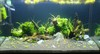 3ft CRS tank