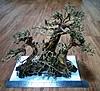 Bonsai Tree D