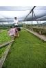 AQ @ Teo Aquatic Plant farm