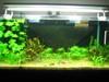 My Latest 1month process 3ft aquascape