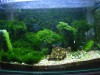 My updated tank June 07