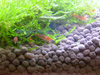 LED Shrimp Tank