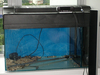 Maia's Tank pictures